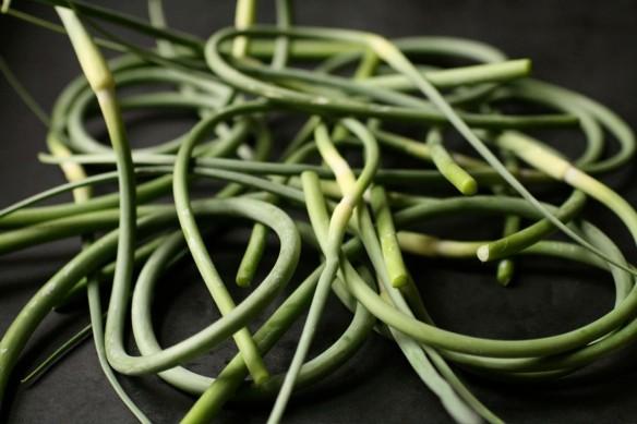 garlic_scapes