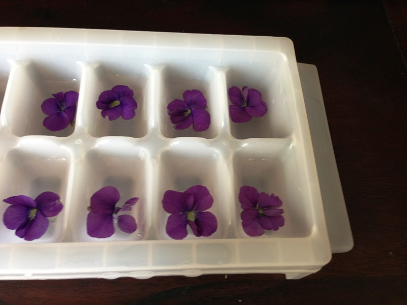 violet ice cubes