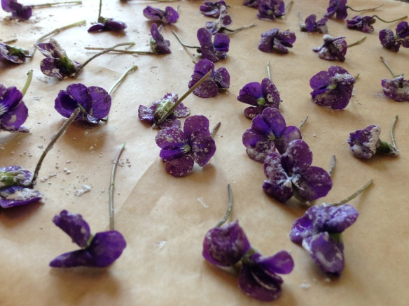 Drying Violets on parchment lined baking sheet