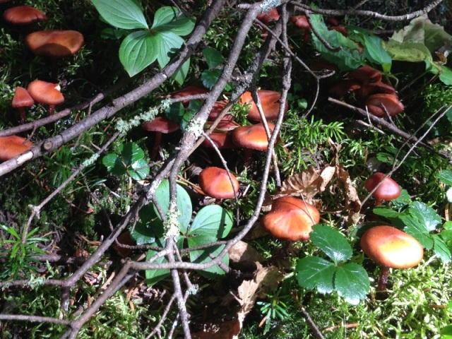 Baby mushrooms among the twigs