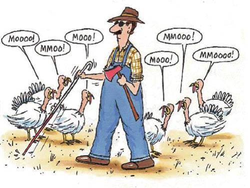 turkey_moo